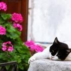 naxos-cat