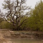 potamos-kireas-khreas-river-24