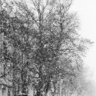 Χιόνια στην Αθήνα, κάτω από την Ακρόπολη και τον Παρθενώνα