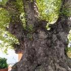 Τσαγκαράδα, Πήλιο Μαγνησίας